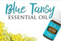 blue tansy essential oil