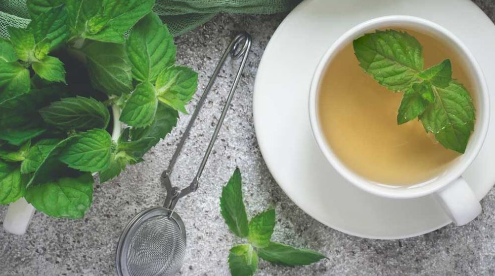 How to Harvest Mint Leaves